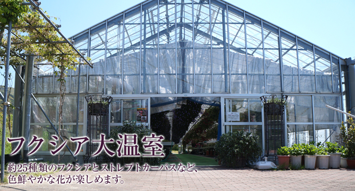 フクシア大温室